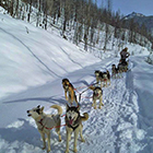 Absaroka Dog Sled Tours - Dog Sled Tours All Ages