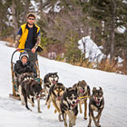 Absaroka Dog Sled Tours - Mush Your Own Dog Team