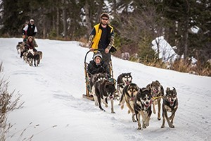 Absaroka Dog Sled Treks at Chico Hot Springs : Just 30 minutes north of the Gardiner entrance to Yellowstone, select from our Tenderfoot, Half-Day and Full-Day treks. All ages love our dogs. Book prime winter days now.