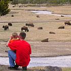 Westracs Park Tours - Yellowstone Park Tours