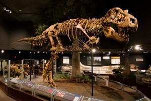 Museum of the Rockies - a Smithsonian Affiliate :: Recognized as one of the world's finest research and history museums. Renowned for our dinosaur collection, fossils, permanent & rotating exhibits, history farm & kids events.