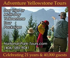 Adventure Yellowstone Year-Round Park Tours : Hands-on excursions into Yellowstone National Park to see animals up close by hiking or skiing into their natural environs. Ideal for family, tour or international groups, fluent in English & Japanese. Kids love our interactive program. Celebrating 21 years and 40,000 guests.