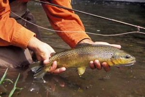 Plan Your Trip with Montana Fly Fishing Guides LLC :: Montana fly fishing trips that will give you & your family a true western experience, anglers of all abilities welcome. Experienced, professional, courteous & fun guides.