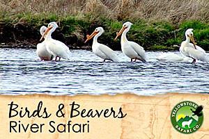 Wildlife River Safaris - fun and interactive