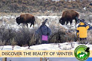 Yellowstone Safari Company - year-round tours