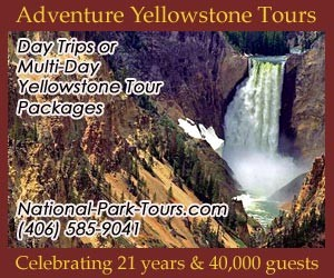 Adventure Yellowstone Year-Round Park Tours : Hands-on excursions into Yellowstone National Park to see animals up close by hiking or skiing into their natural environs. Ideal for family, tour or international groups, fluent in English & Japanese. Kids love our interactive program. Celebrating 27 years and 44,000 guests.