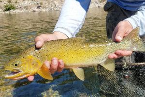 Fins & Feathers - Orvis Shop & Guide Service