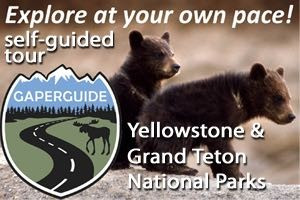 GaperGuide: Fun, Detailed Tour At Your Own Pace! : The most convenient way to learn everything about Grand Teton & Yellowstone Nat'l Parks, from your own car! Voted the easiest, most detailed,& entertaining tour! GPS Enabled.