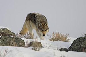 Wild Side Wildlife Tours