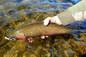 The Tackle Shop - Madison River Fly Fishing