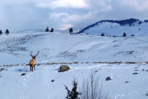 In our Nature Guiding - winter wildlife tours