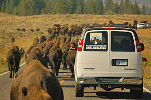 Yellowstone Hiking Guides and Active Van Tours