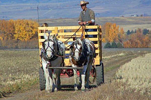 Sunrise Pack Station - hay rides for all ages
