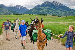 Montana Llama Guides | Best Backcountry companion