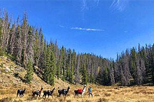 Montana Llama Trips