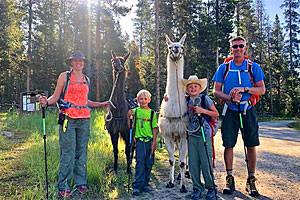 Half-Day Llama Hike & Picnic Trips in Bozeman