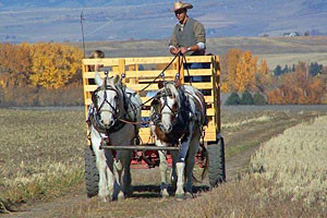 Sunrise Pack Station - local fall hay rides