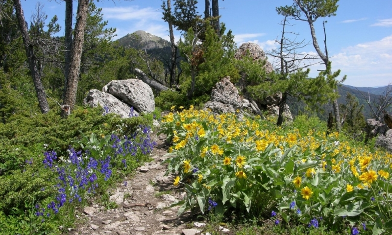 Summer flowers on the hike to baldy mountain from the M