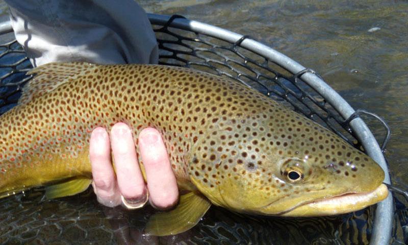 Yellowstone River Fishing Montana