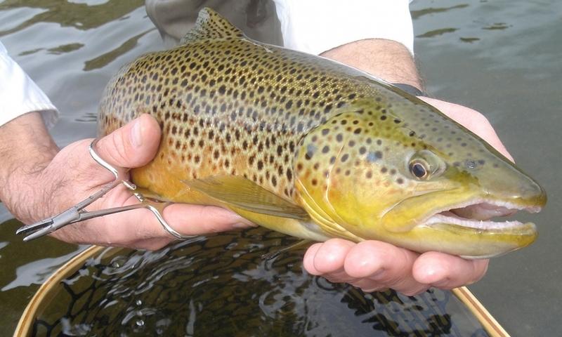 Missouri River Fishing Fish Montana Craig