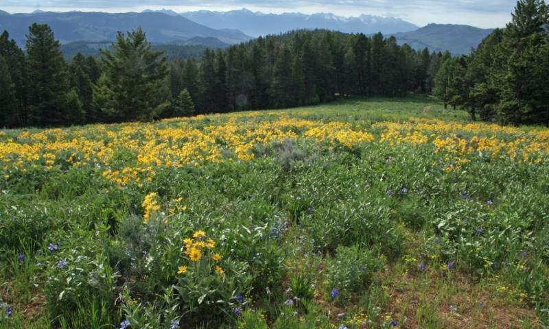 Gallatin Forest Montana Bridger Mountains