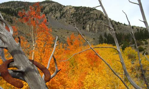 Fall Leaves Gardiner Montana