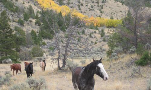 Paradise Valley MT Horses