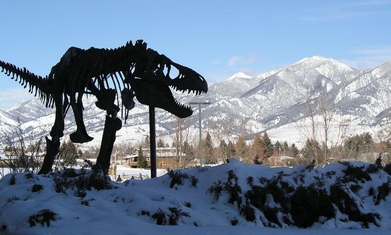 Museum Of The Rockies T-Rex Bozeman Montana