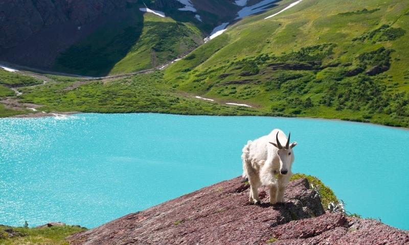 Places To Visit Glacier National Park Alltrips