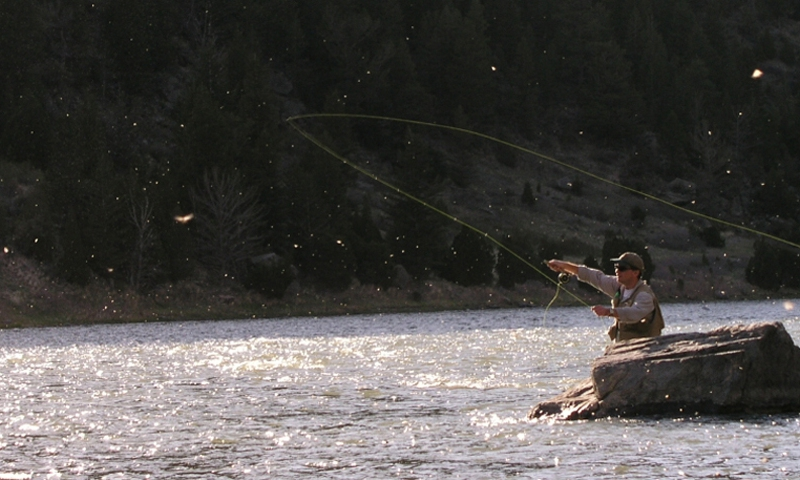Madison River Caddis Hatch Fishing Fly Montana