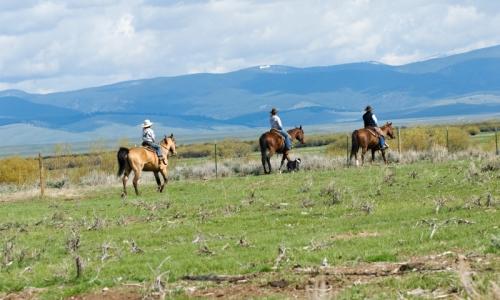Bozeman Montana Horse Pack Trips