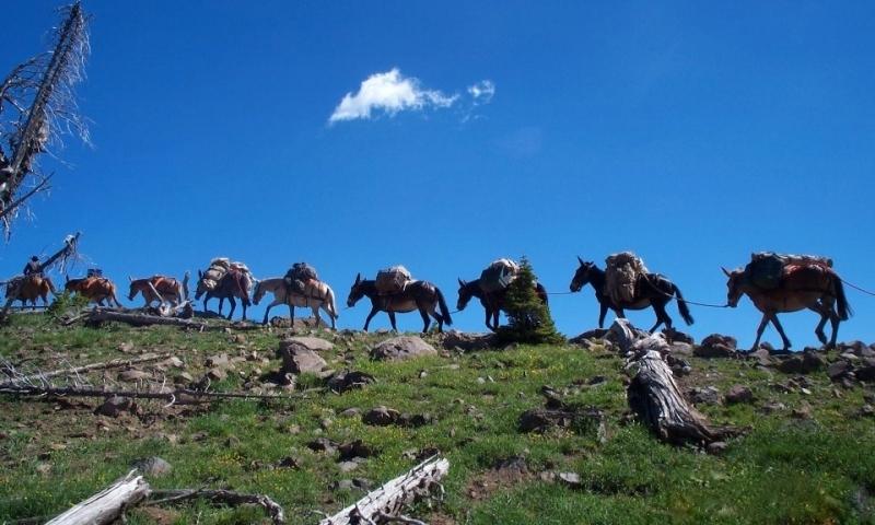 Yellowstone Pack Trips
