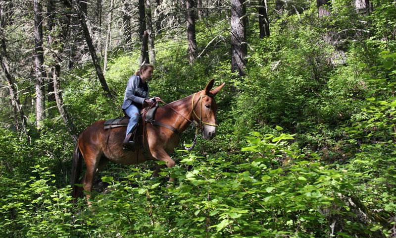 Horseback Riding in the Gallatin National Forest