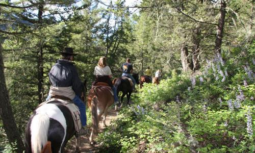 Gallatin Forest Horseback Riding Montana