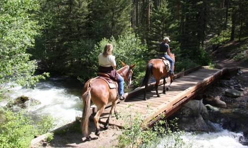 Bozeman Horseback Riding